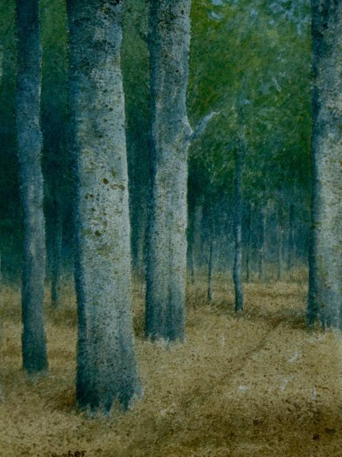Hughes-Kevin-Eucalyptus-Forest.jpg