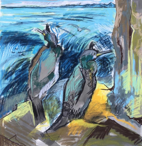 Ingrey-Counter-Two-Shags-and-Herring-Gull-Isle-of-May.jpg