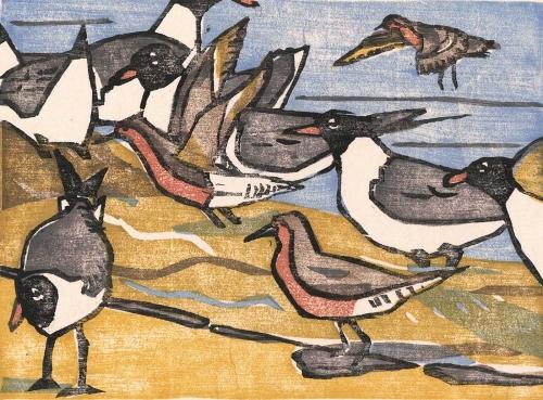 Januski-Ken-Red-Knots-And-Laughing-Gulls-At-Reeds-Beach.jpg