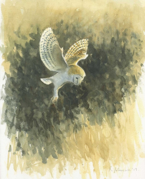 Johnson-Richard-Morning-Barn-Owl.jpg