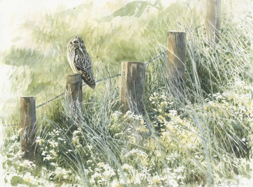 Johnson-Richard-Short-eared-Owl-at-Burwell-Fen.jpg