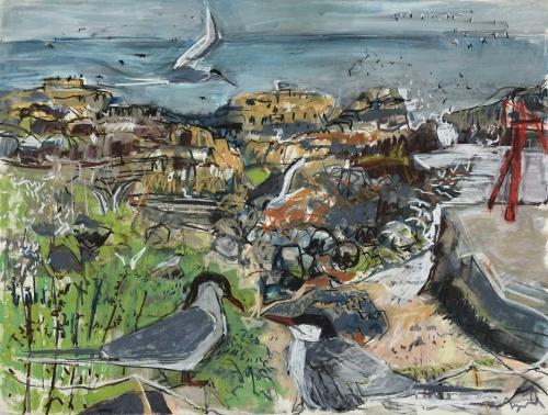 Jones-Kittie-Tern-colony-isle-of-may.jpg