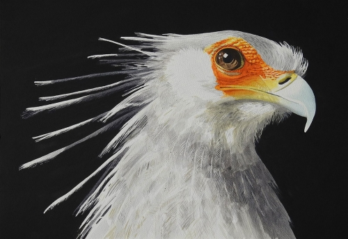 Lambie-John-Secretary-Bird.jpg