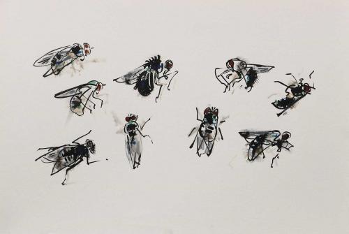 Legg-Wynona-Fly-Studies.jpg