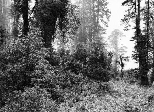 Li-Jingfeng-Motuo-Forest.jpg