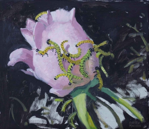 Macara-Andrew-Rose-and-Caterpillars.jpg