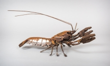 Mead-Harriet-Saw Blade Crayfish 22.jpg