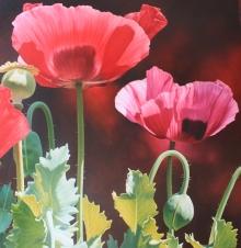 Alexander-Linda-Poppies.jpg