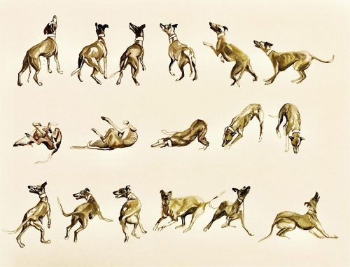 Munro-Katie-Whippet-Sequence.jpg