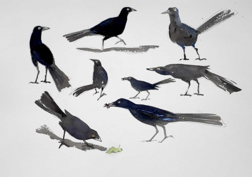 Neill-William-Columbian-Grackles.jpg