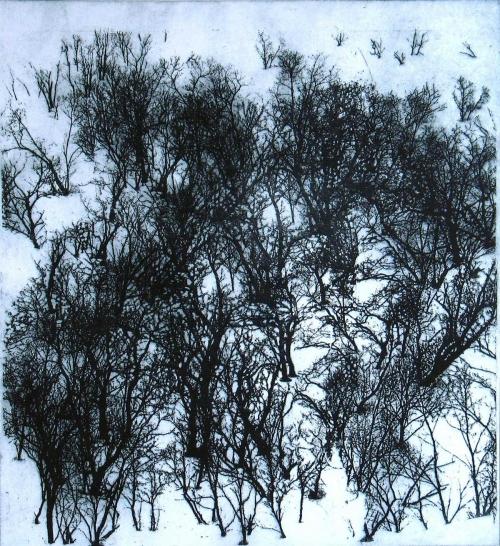 Perring-Susie-Enchanted-Forest.jpg