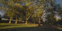 McLaughlin-Mark-Autumn Afternoon.jpg