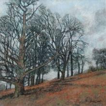 Last-Bob-Trees-in-Richmond-Park.jpg