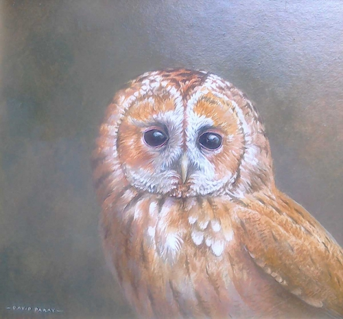 Parry-David-Tawny-Owl.jpg