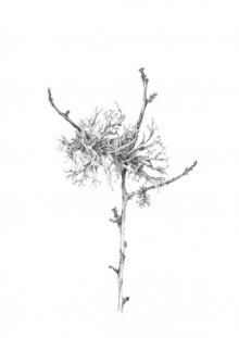 Crispin-Louisa-Lichen on Birch V.jpg