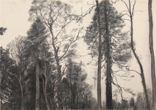 Smith-Jenny-Sequoia.jpg