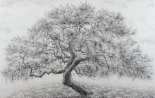Wright_Roy_Japanese White pine.jpg
