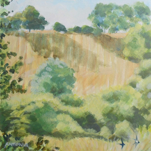Phillips-Antonia-Axmouth-Hill--The-Hanging-Field.jpg
