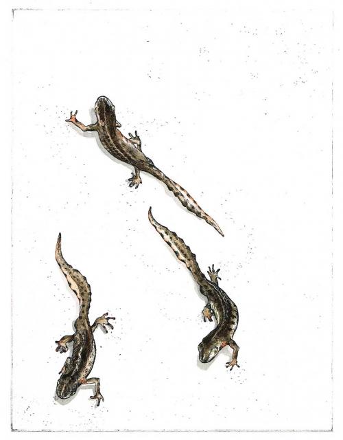 Preussen-von-Beatrice-Creeping-Newts.jpg