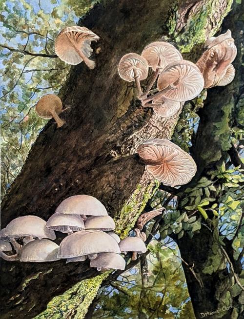 DesmondClarkPorcelain-Mushrooms-at-Haldon,-Devon-1.jpg