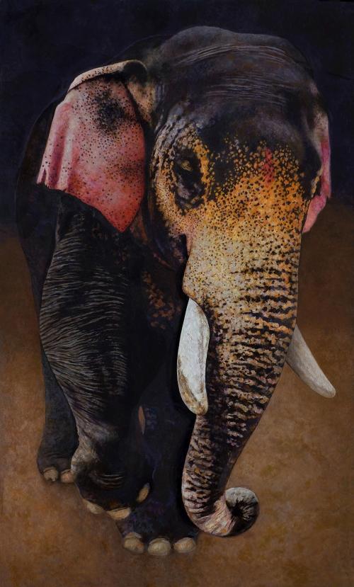 nicdartnell-Indian-Elephant.jpg