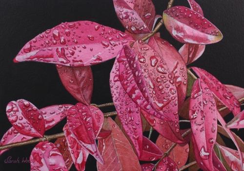 Wood-Sarah-Pink rain.jpg