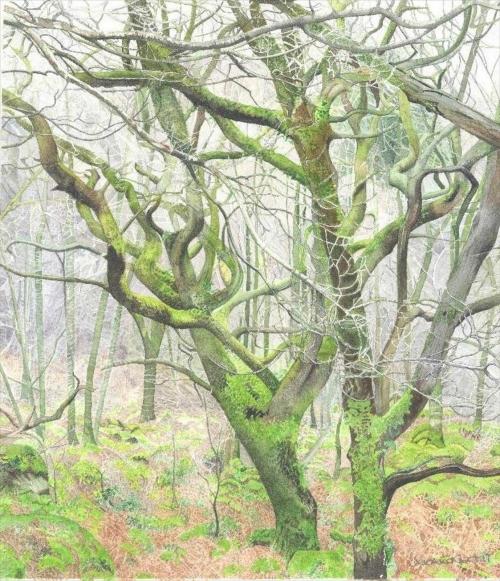Guest-Veronica-Elan-Valley-Trees.jpg