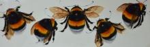 Dowler-Niggy-The 5 Bees.jpg