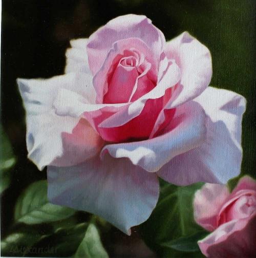 Alexander-Linda-Summer-Rose.jpg