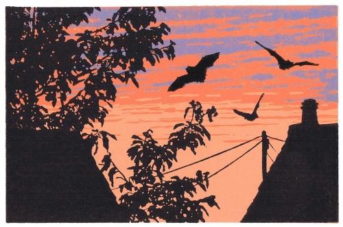 Ramskill-Gary-Back-garden-Bats.jpg