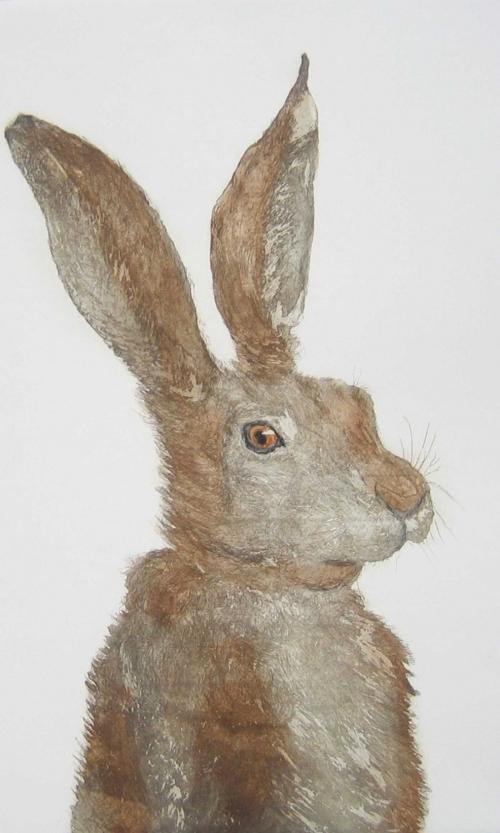 Rollo-Sonia-The-Noble-Hare.jpg