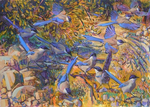 Cole-Daniel-Azure---winged-magpies-,-Extremadura.jpg