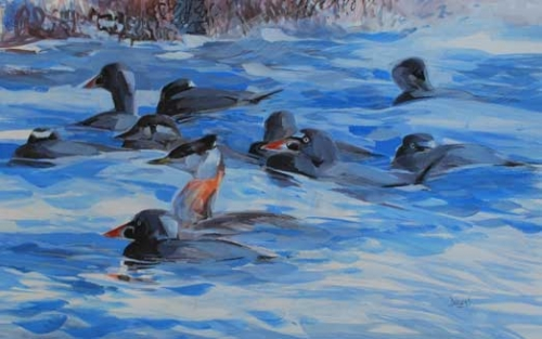 Derry-Nick-Red-necked-Grebe-and-Surf-Scoters.jpg