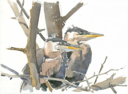 Dusen-Barry-van-Young-Herons-at-Conway-Hills.jpg