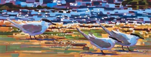 Edwards-Brin-Sandwich-Terns.jpg