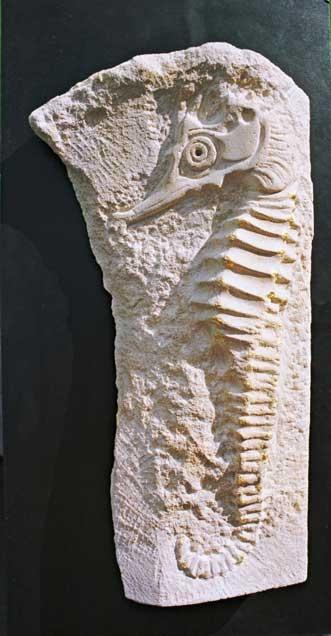 Goold-Madeline-Seahorse.jpg