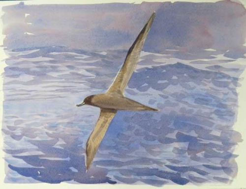 Rees-Darren-Sooty-Albatross-(From-Ice-Bound).jpg