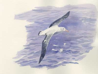 Rees-Darren-Wandering-Albatross-(From-Ice-Bound).jpg