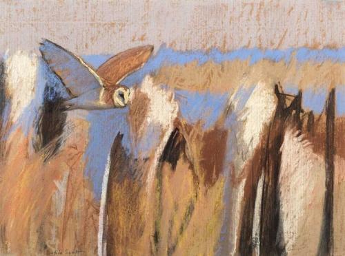 Scott-Dafila-Barn-Owl-Over-Fen.jpg