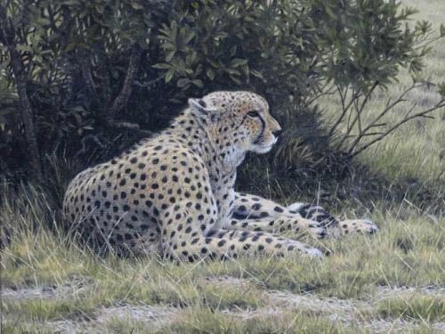 Turvey-Simon-Cheetah.jpg