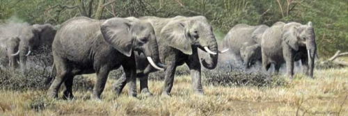 Turvey-Simon-Elephant-Herd.jpg