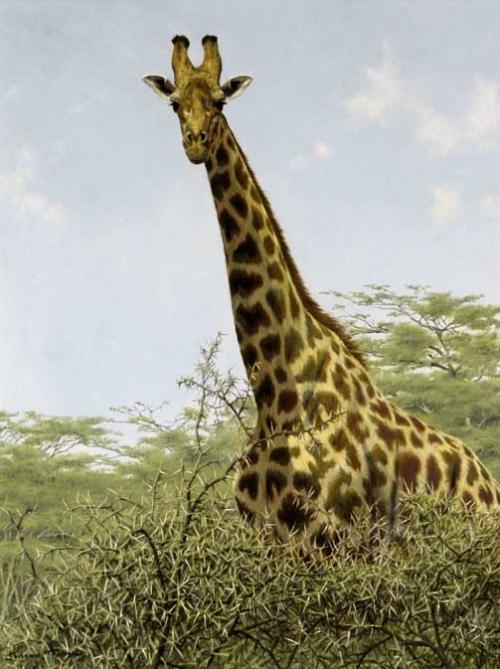 Turvey-Simon-Giraffe-(Rothschild's).jpg