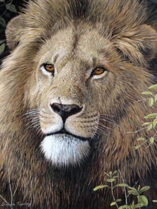 Turvey-Simon-Lion.jpg