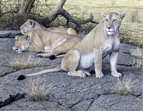 Turvey-Simon-Lions-at-Masai-Mara.jpg