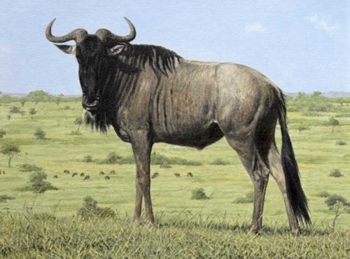 Turvey-Simon-Wildebeest.jpg