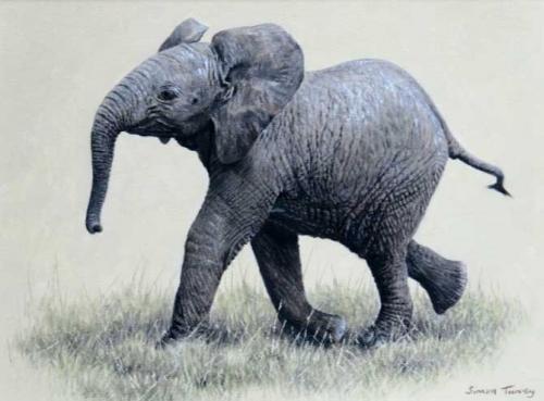 Turvey-Simon-Young-Elephant.jpg