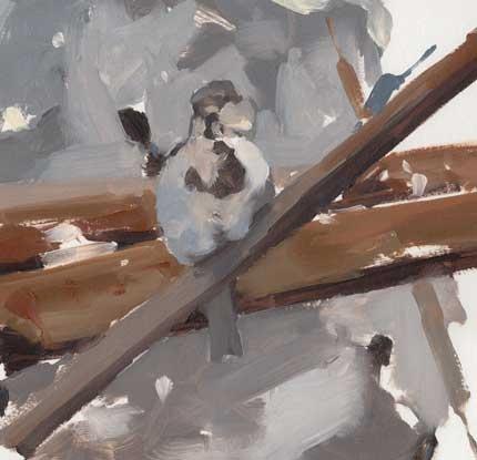 Tyson-Esther-Sparrow-on-farm-scrap.jpg