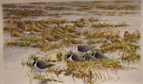 Warren-Michael-Lapwings-&-Golden-Plovers.jpg