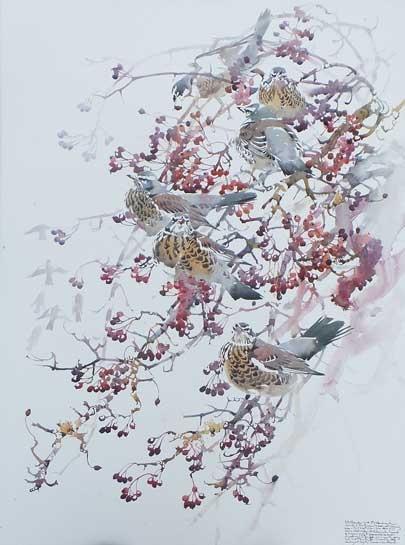 Woodhead-Darren-Fieldfare-and-Hawthorn-berries.jpg