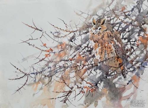 Woodhead-Darren-Long-eared-Owl-in-Buckthorn.jpg